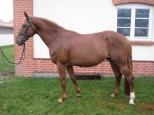 myytävä hevonen horse sale