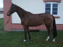 horse продать лошадь
