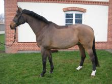 vendere un cavallo häst på sälja