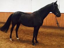 horse vender un caballo